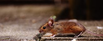 Careline disgusted by rat infested UK care home