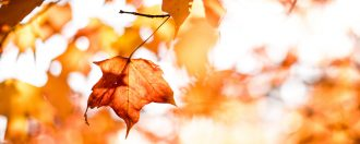 Changing Seasons – What To Look Forward To