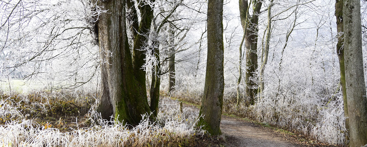 Winter Health - Carers and the Elderly