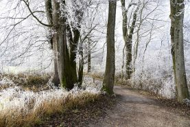 Winter health for carers and the elderly