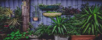 5 Gardening Tools for the Elderly