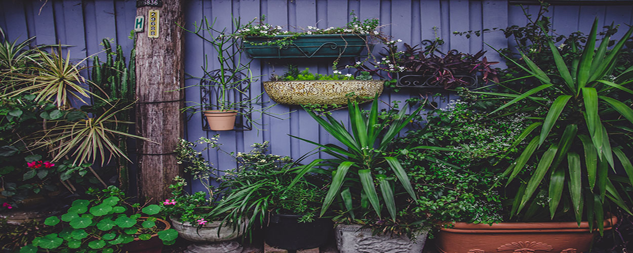 Wall of pots and plants