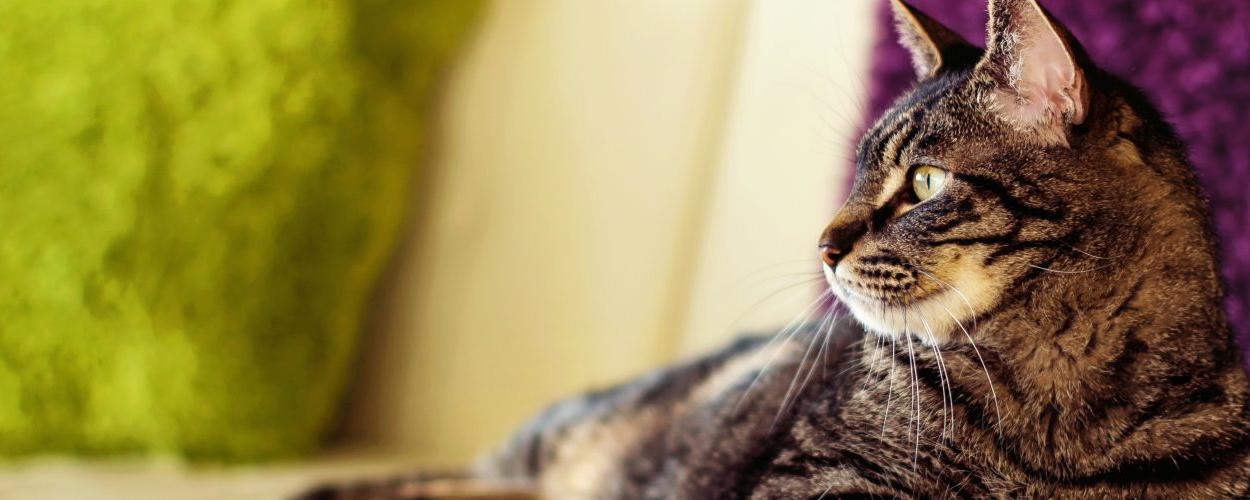 Adopt a cat today